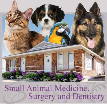 Manley Animal Hospital